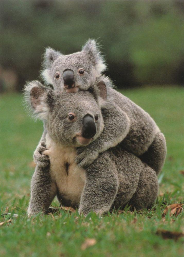 Bebe animaux - Image bebe animaux ...